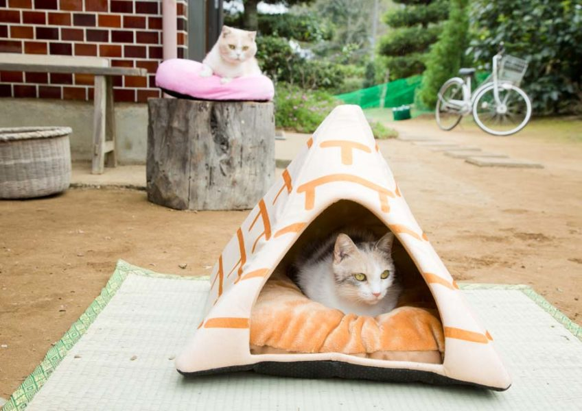 """© 2017 Hit-Point/""""Neko Atsume House"""" Production Committee"""
